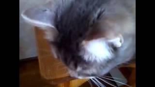 Витаминки для котов / как дать коту витамины