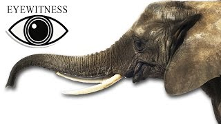 EYEWITNESS | Elephant