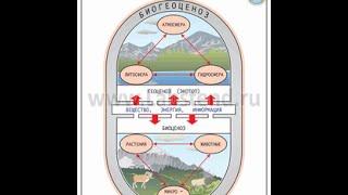 Экосистема и биогеоценоз