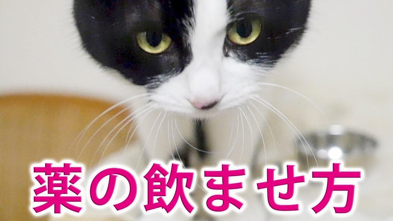 ませ 飲 猫 方 薬