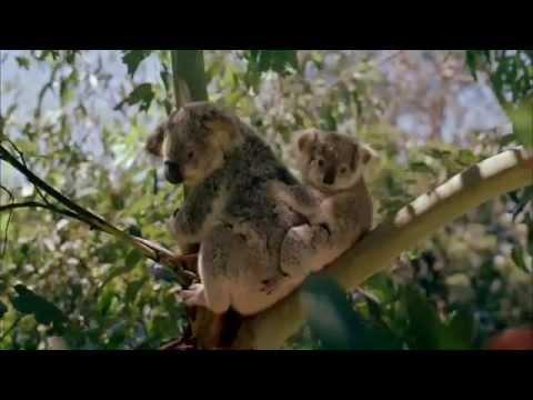 Land Beyond Time - Australia