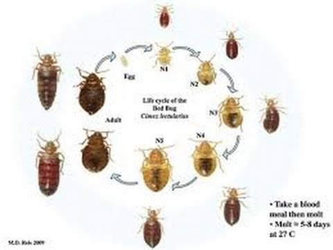 Bed Bug Killer Secrets Monmouth Junction New Brunswick New Jersey