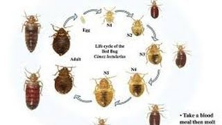 Bed Bug Killer Secrets Monmouth Junction & New Brunswick New Jersey 732-309-4209