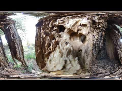 Im Ameisenbau 360°