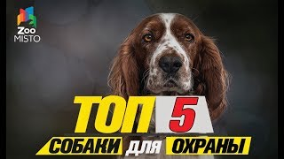 Топ 5 собаки для охраны\Top 5 dogs to guard