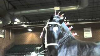 World Percheron Supreme Champion