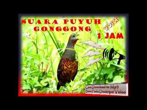 quail call voice
