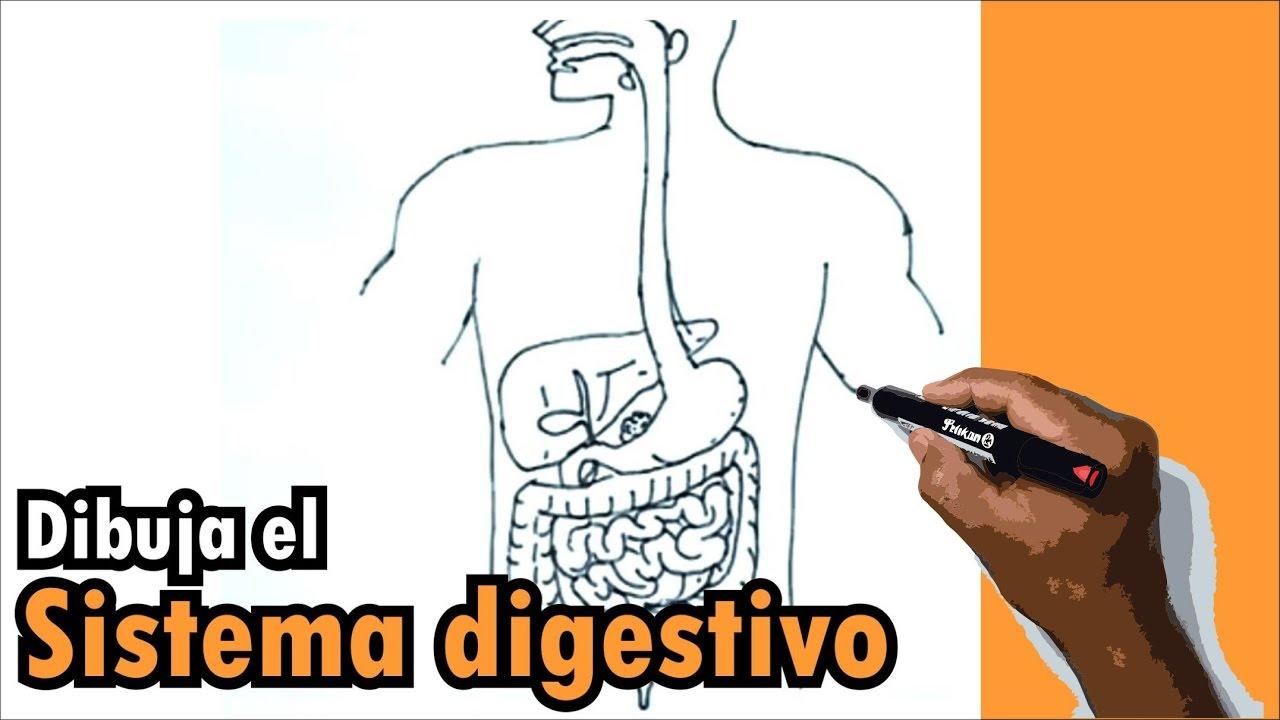 Dibujos del cuerpo humano 1/9 - Cómo dibujar el sistema digestivo ...