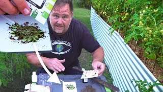 What's the Perfect Tomato pH Soil Level? We Test 3 Garden Beds
