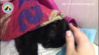 Странная находка  кошка в коме с землей во рту и бритым животом help the cat