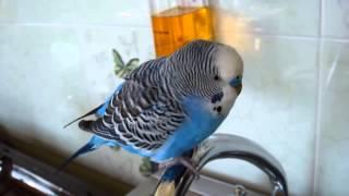 Приколы с животными  Говорящий попугай Кеша