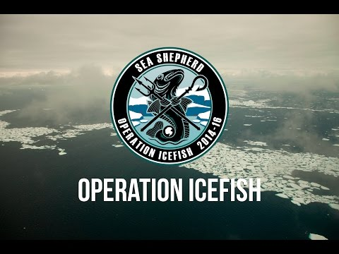 Illegal Fishing in Antarctica Shut Down by Sea Shepherd.