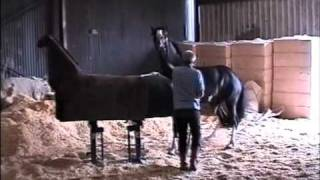 Horse Stock - Ward Engineering  .wmv