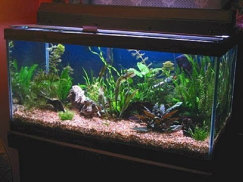 50 gallon planted freshwater aquarium youtube for 50 gallon fish tank
