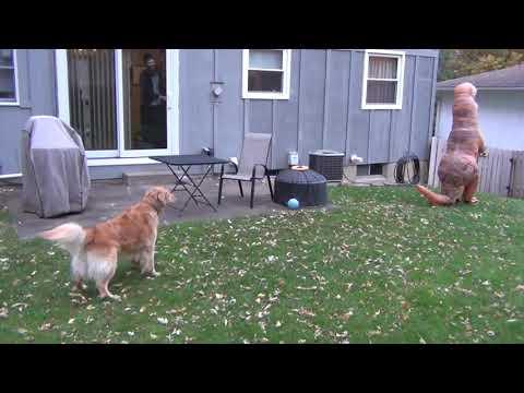 Vlad und Nikita spielen auf dem Spielplatz Verstecken mit Spielzeug from YouTube · Duration:  4 minutes 25 seconds