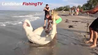 Köpek Balığı böyle yakalanır