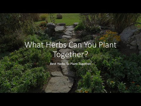What Herbs Can You Plant Together - Best Herbs To Plant Together