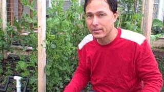 Why Grow In Raised Garden Beds? What Size Should I Build A Raised Bed?