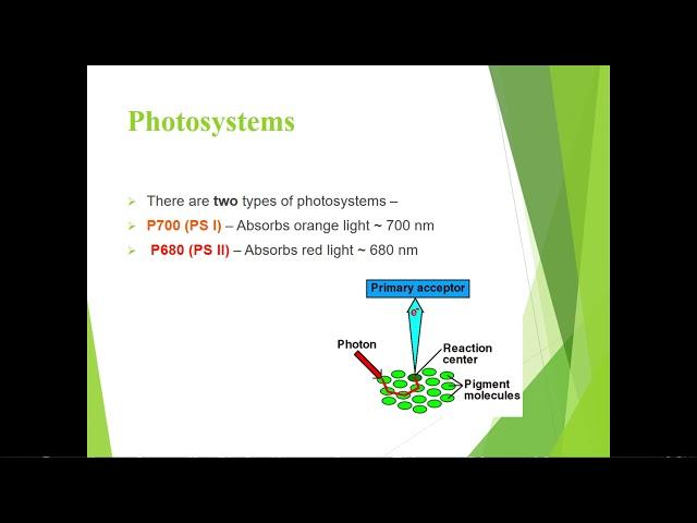 Structure of Chloroplast - Ms NIRMALA JAYARANI