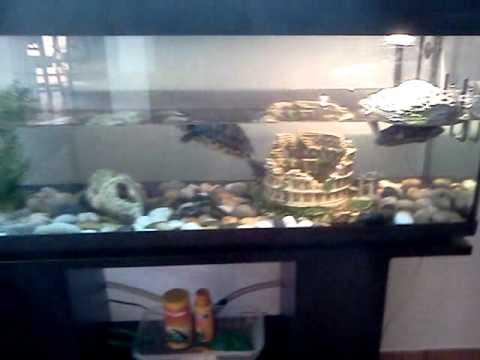 Un nuovo acquario per le mie due tartarughe youtube for Acquario esterno per tartarughe