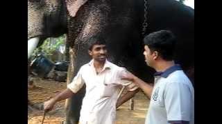 HASEEB CHAVAKKAD WITH ELEPHANT  SHIVASHANKARAN....OLD RECOLLECTIONS BY SHAJAHAN SINKAM CHAVAKKAD