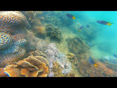 Snorkeling - Coral, Sea Anemone, Demoiselle & Chaetodon @HoiHaWan 豆娘魚 蝴蝶魚 海葵 珊瑚 @海下灣 浮潛 FHD1080