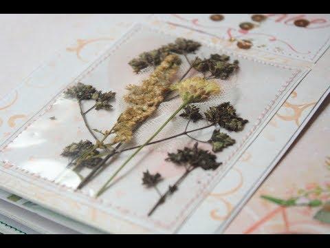 Вопрос: Какие растения можно использовать как природный клей?