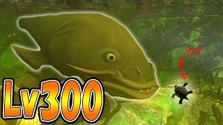 巨大ナマズ Lv300!! ついに沼の化け物を作りだしてしまった!! サメの海で弱肉強食の壮絶バトル!! - Feed and Grow Fish #41 thumbnail