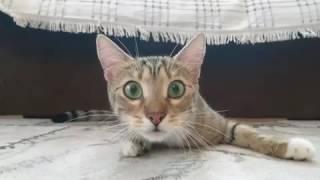 Cat Watching A Nightmare on Elm Street