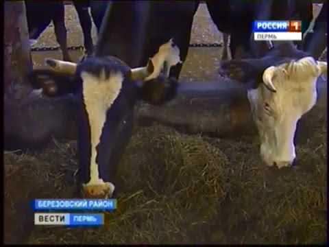 Пермский край, Березовский район, село Плотниково