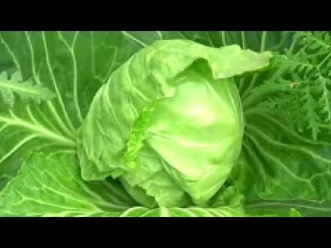А удобрение под ногами — «сорняковая болтушка», или