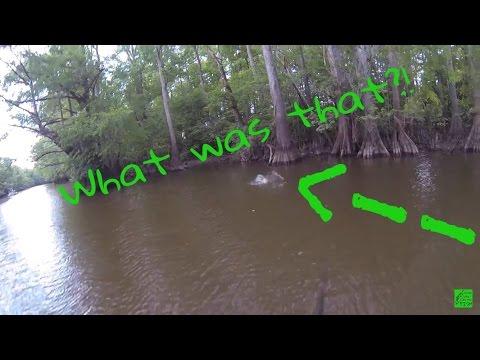 Tar River NC Fishing | 365 Bass Challenge