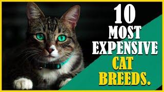 CAT BREEDS | MOST EXPENSIVE CAT BREEDS | TOP 10