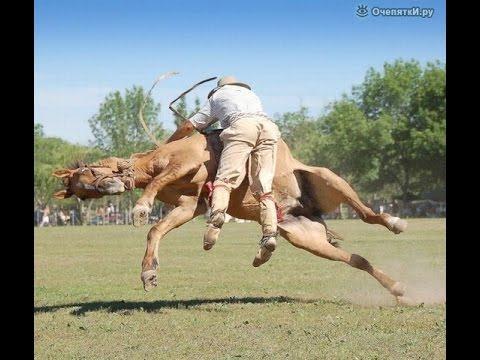 Лошади, 22 смешных фото приколов