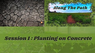 Along The Path - Session 1 : Planting on Concrete