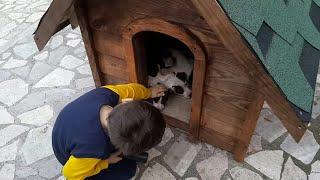 Gambar cover Bilge Kağan bahçivan olmuş bahçe temizliği yaptı,yavru köpekleri sevdik