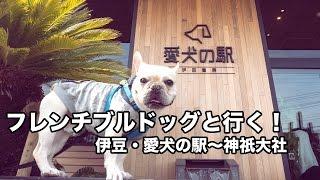 フレンチブルドッグのこてつと一緒に静岡県の伊豆へドライブに行ってき...