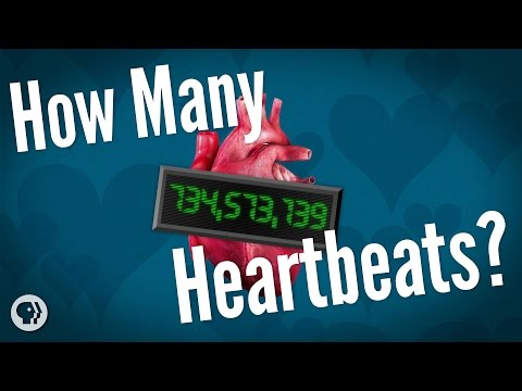 How Many Heartbeats Do We Get?