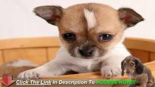 Puppy Training Versus Dog Training