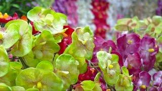Цветы в интерьере. Магазин искусственных цветов. Artificial flowers(, 2012-12-10T00:04:51.000Z)