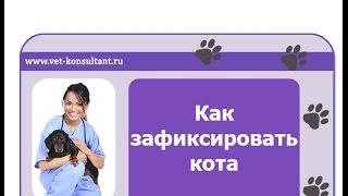 Как зафиксировать кота