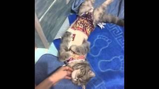Котейка экзот спит, как хорек!!!