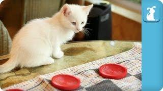 Kittens Love Playing Checkers - Kitten Love