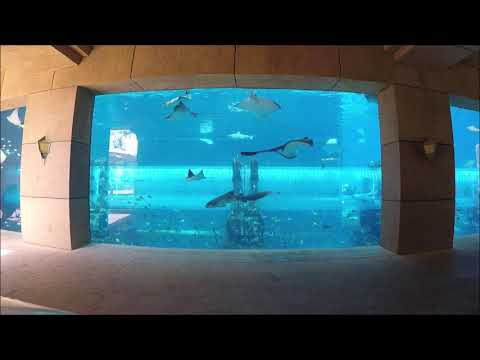 Atlantis The Palm | The Lost Chambers Aquarium | Dubai | Aquaventure