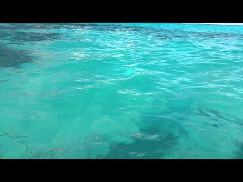 Jelly Fish 15