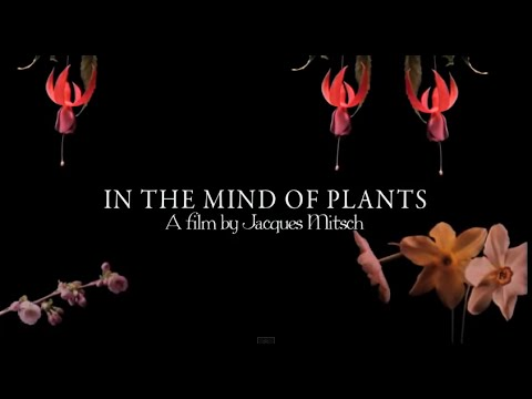 In the Mind of Plants