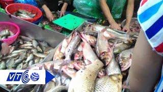 Người Hà Nội đang ăn cá nuôi ở đâu? | VTC