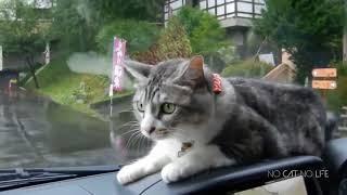 - Приколы про котов #1 -