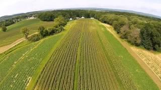 Drone Video: Soar high above Bemben Farm cornfields in Hadley