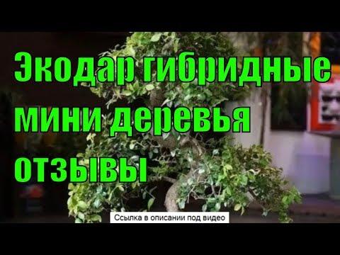 Экодар гибридные мини деревья отзывы мини деревья мини деревья. гибридные деревья! экодар.
